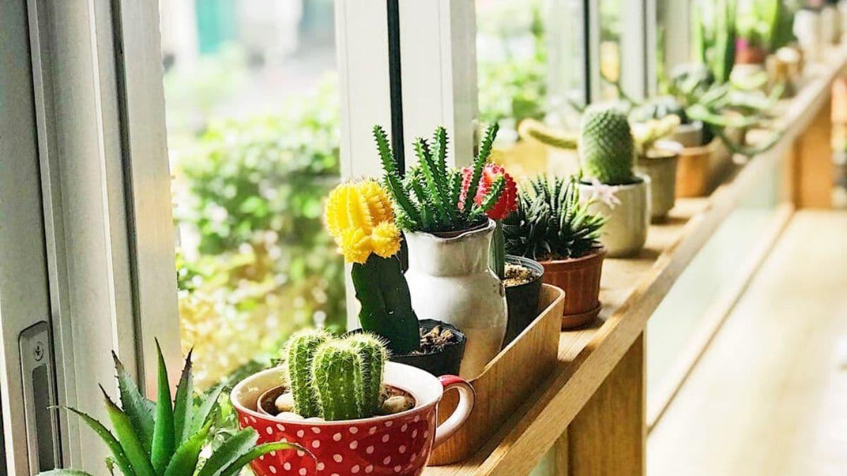 8 astuces pour ne pas faire crever tes plantes d'intérieur