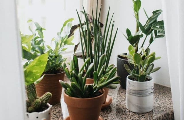 5 plantes pour dépolluer ton appart, vive l'air pur !