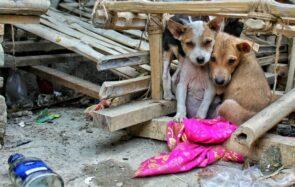 Ces 121 propositions visent à contrer la maltraitance animale