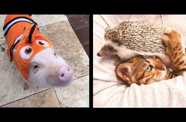 Des animaux mignons et drôles pour bien finir ta semaine