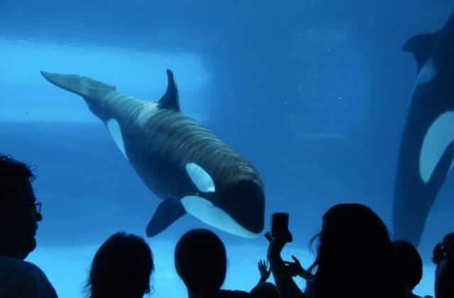 Enfin Des Mesures Gouvernementales Pour Les Animaux Sauvages En Captivite Rockie