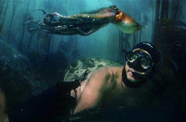 « La Sagesse de la pieuvre », le docu Netflix qui ouvre le débat de la place de l'humain dans la vie sauvage