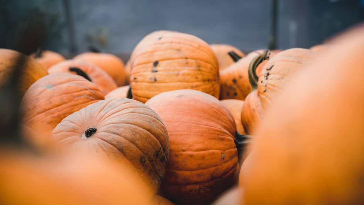 Que faire de vos restes de citrouille après Halloween ?