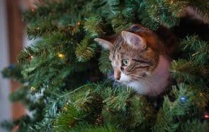 8 idées cadeaux à offrir pour votre chien ou votre chat à Noël