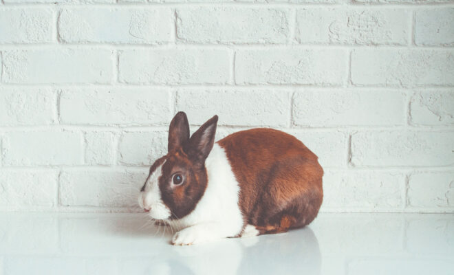 la-chine-arrete-les-tests-sur-les-animaux-pour-les-produits-importes-660x400.jpg