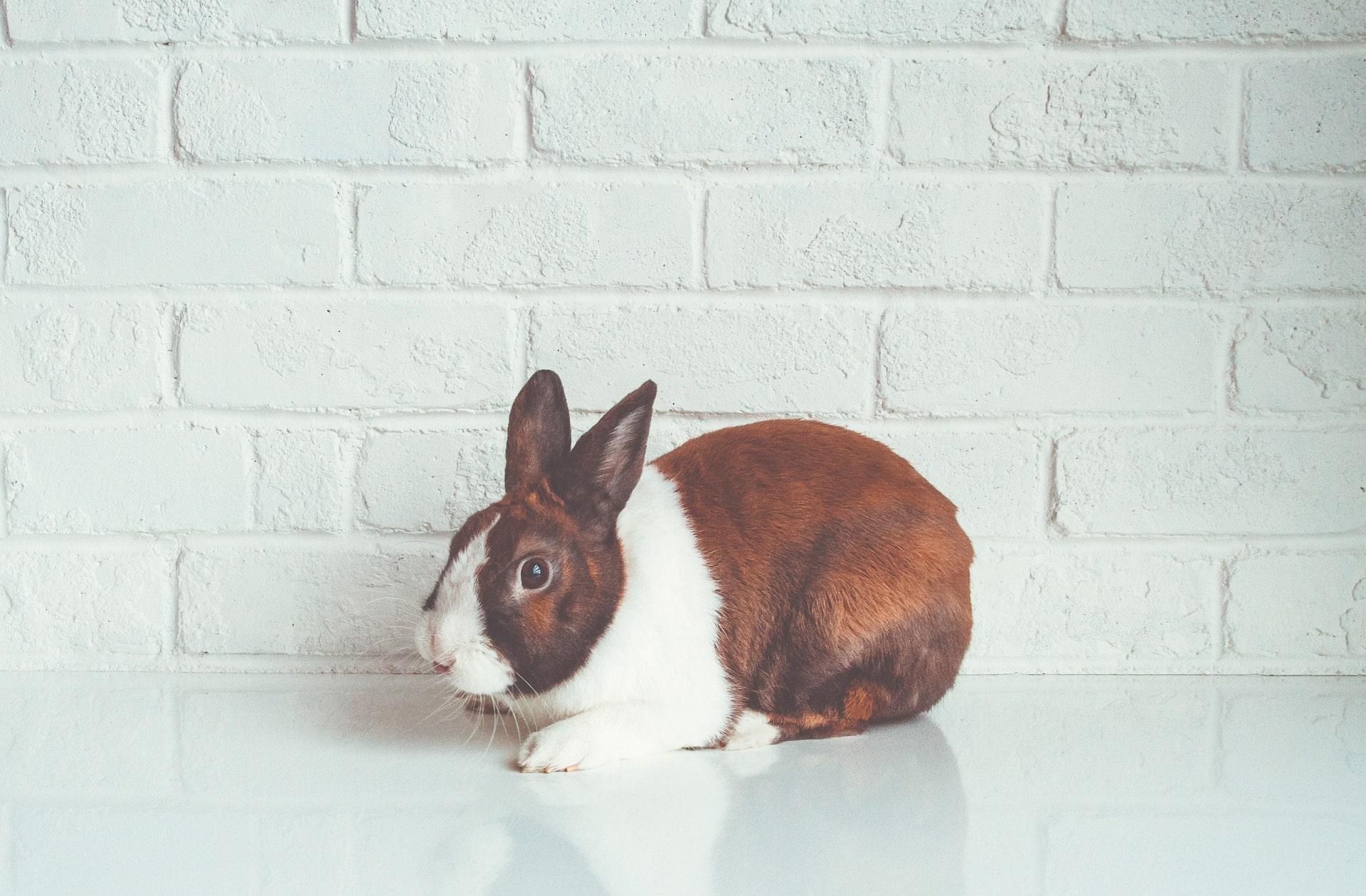 Enfin! La Chine ne va plus imposer sa politique de test sur les animaux aux marques étrangères