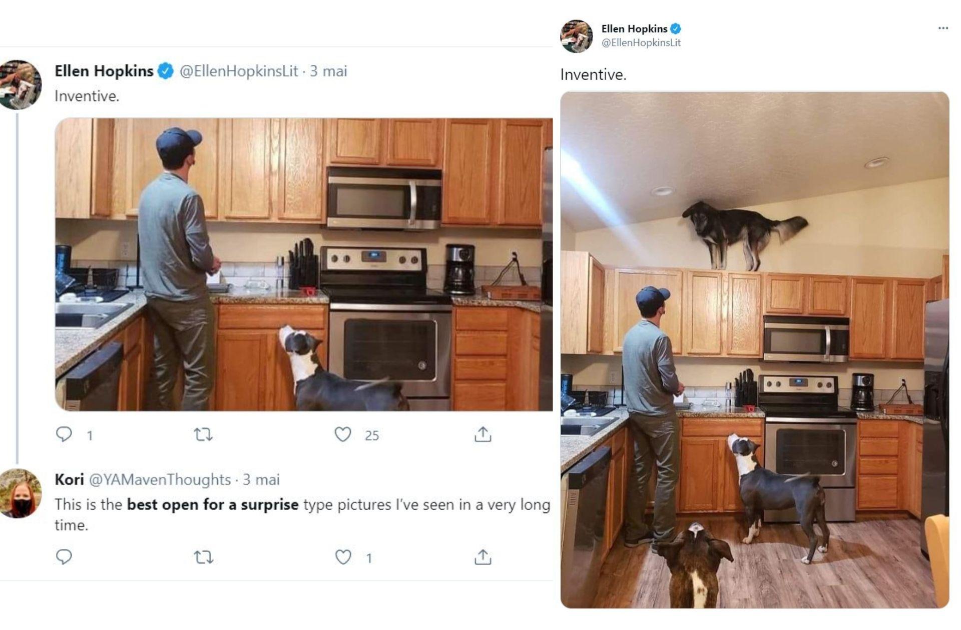 3 chiens dans une cuisine